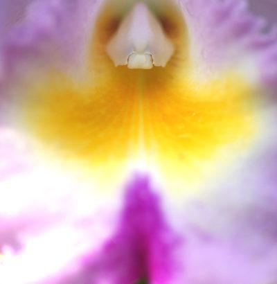 色情的な花